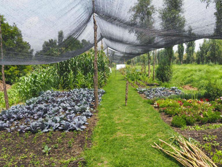 Chinampa Farm