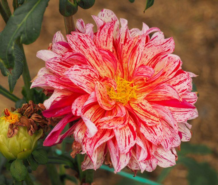 Round Flower on Chinampa