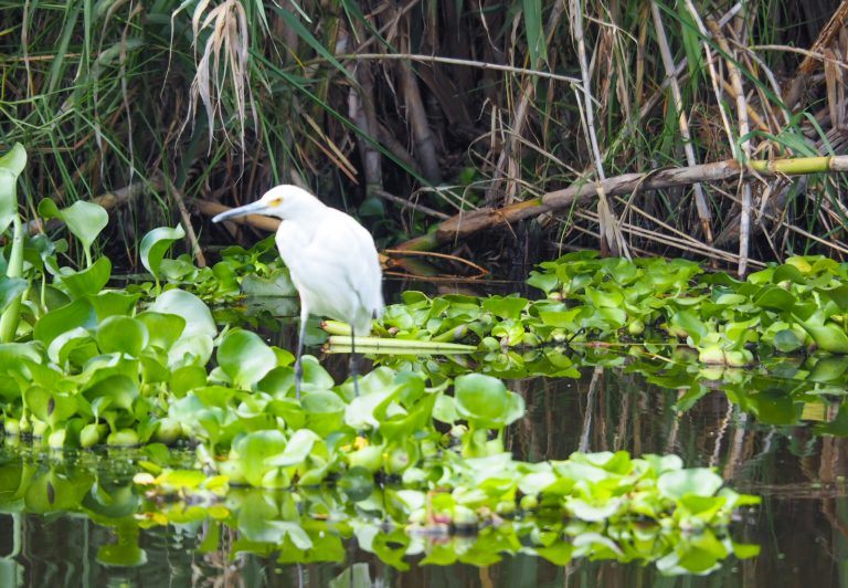 Small Bird in Xochimilco canals