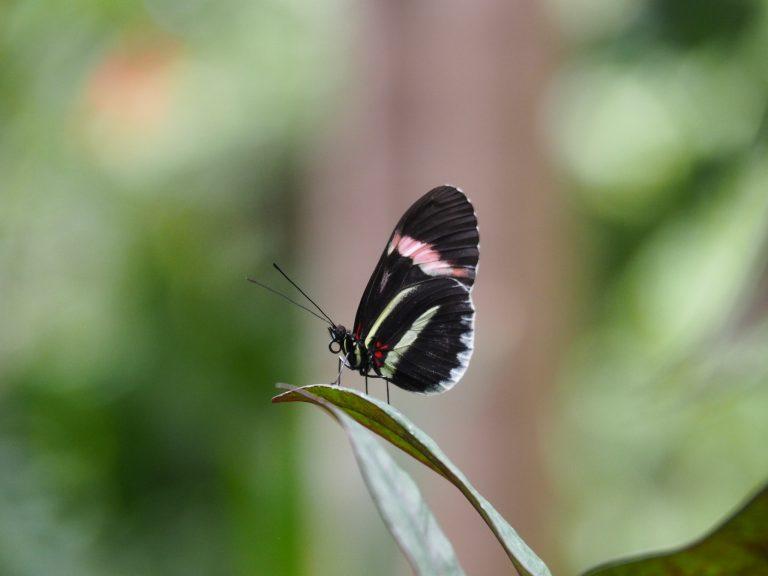 Franklin Park Botanical Garden Butterfly