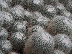Franklin Park Botanical Garden Cactus