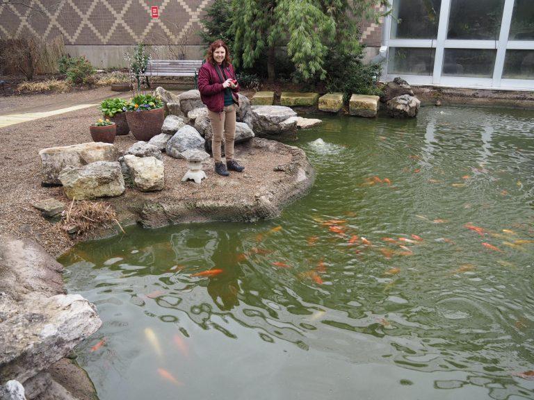Pond at Franklin Park Botanical Garden
