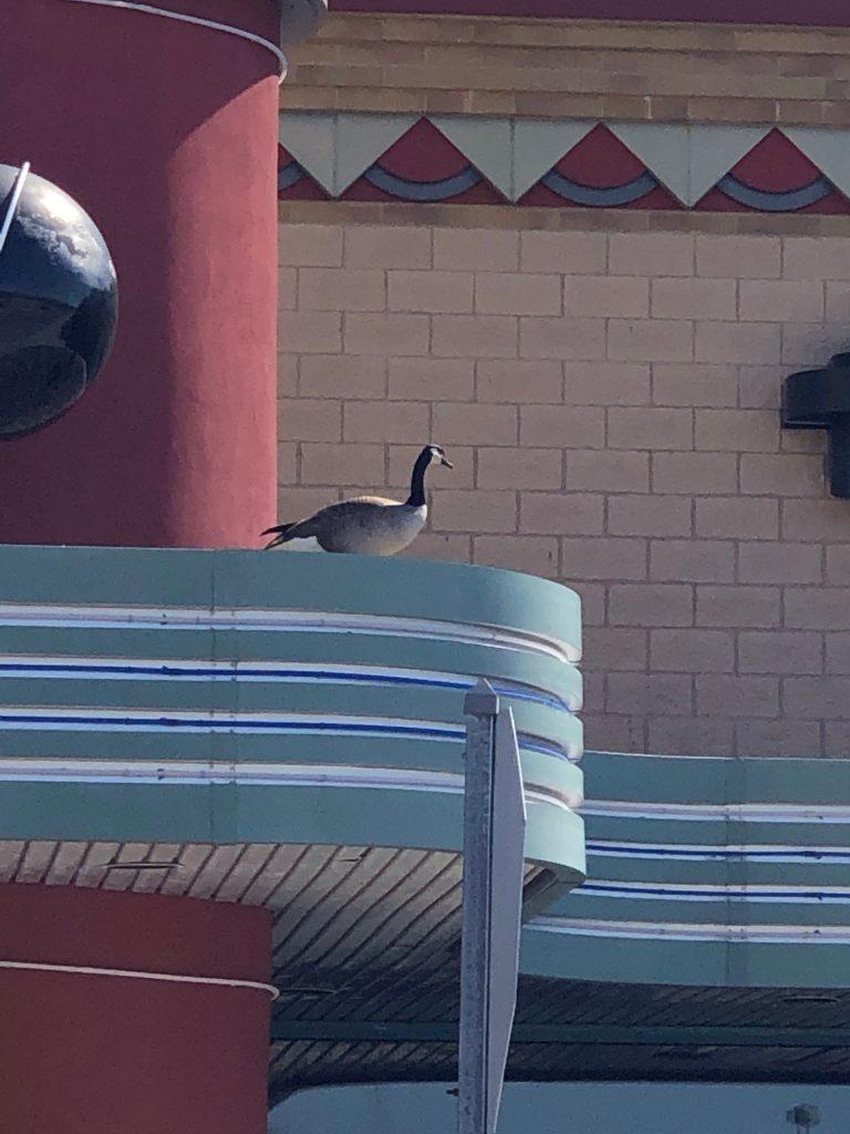 Goose on top of Marcus Theatre in Pickerington Ohio