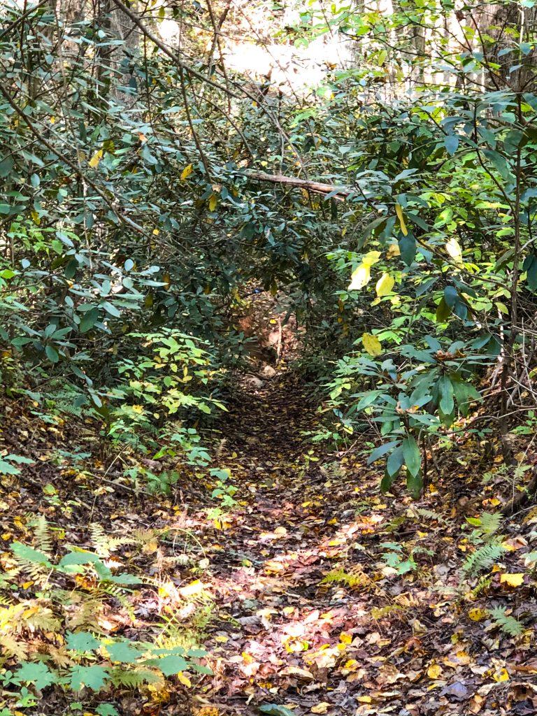 Enota Hiking Trail