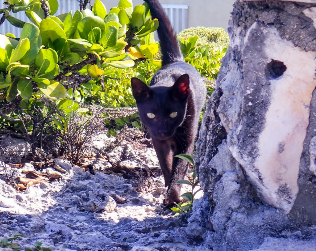 Cat at Dragon Cay Middle Caicos