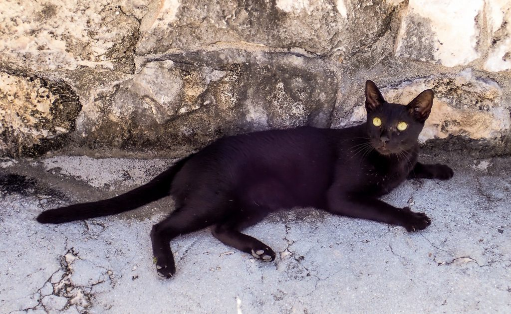 Middle Caicos Dragon Cay Cat