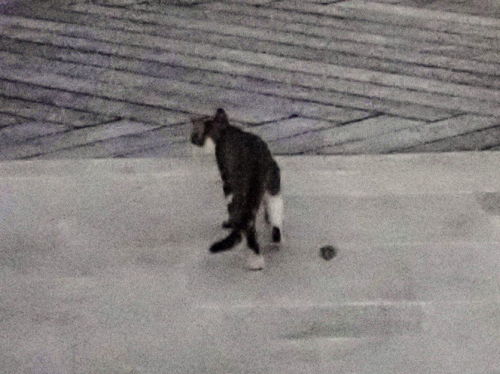 Seven Stars Resort Cat