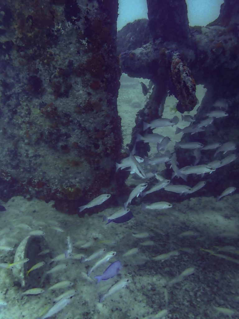 Fish during Snorkeling in Turks and Caicos