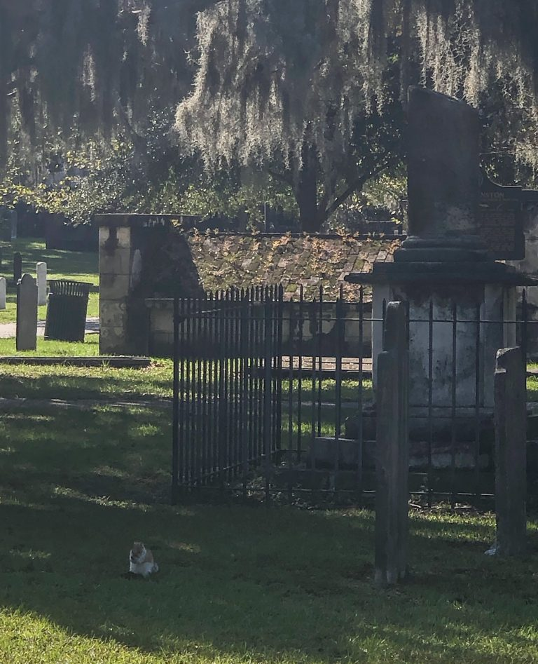 Squirrel at Colonial Park Cemetery in Savannah GA