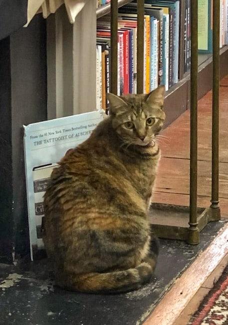 Tabby Cat at E Shaver Bookseller Savannah