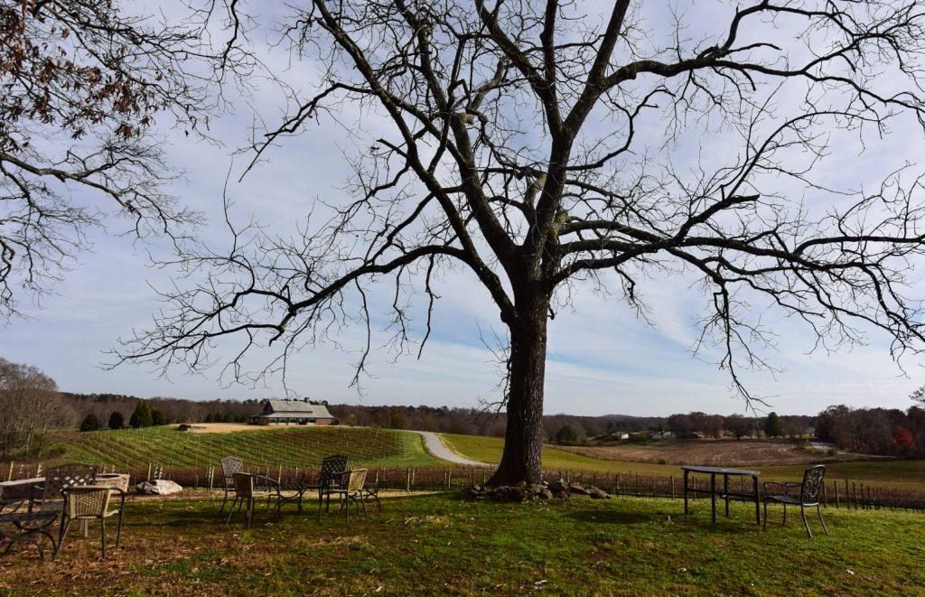 Cenita Vineyards Tree View