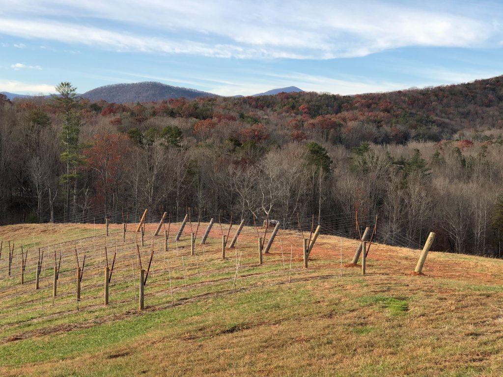 Cottage Vineyard View