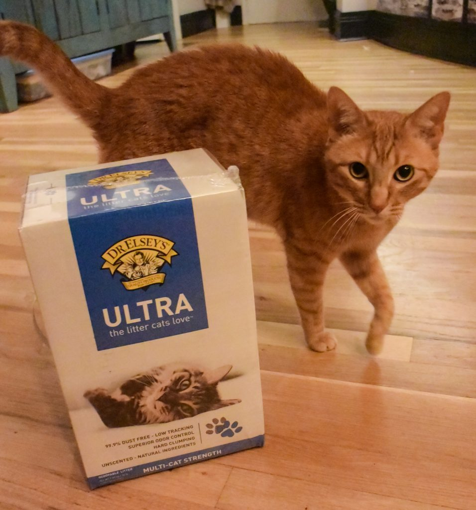Cat with box of Cat Litter