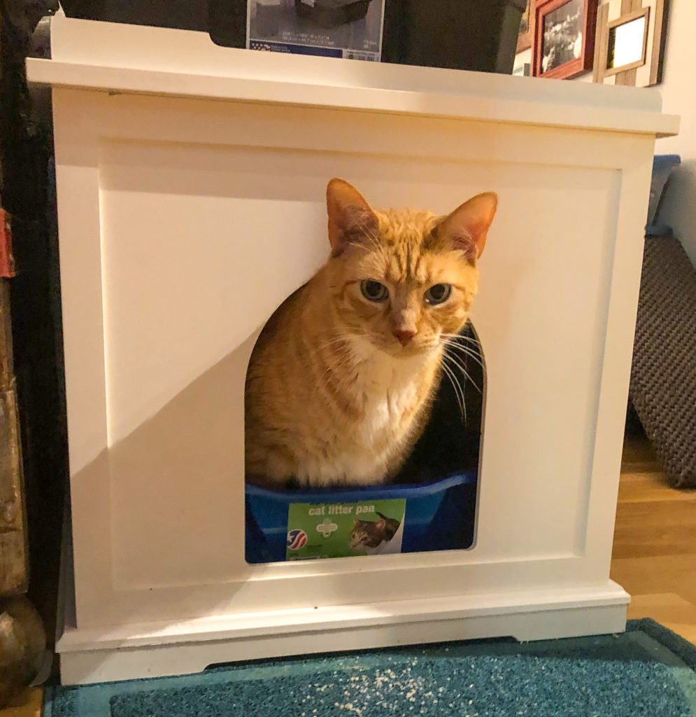 Cat with head sticking out of litter box cabinet