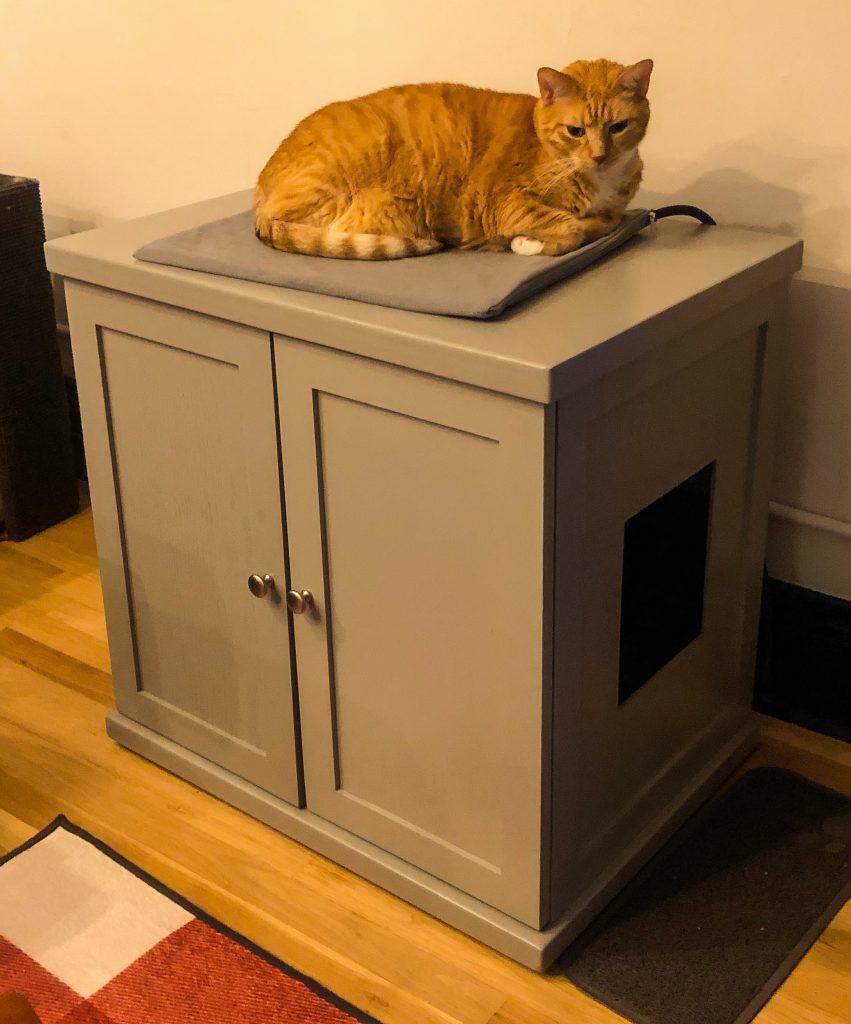 Cat on litter box cabinet