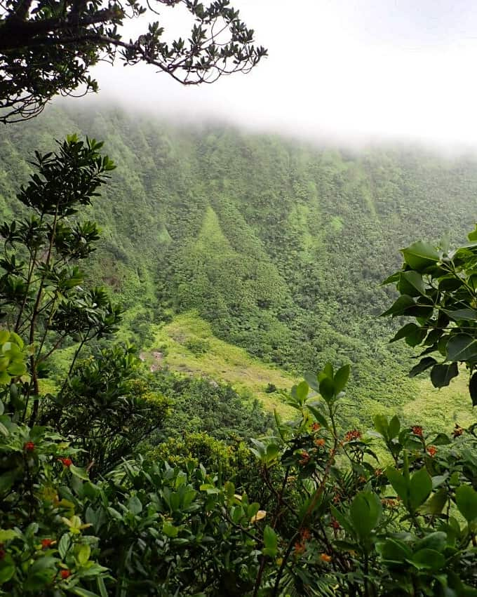 Looking into Mt Liamuiga Crater