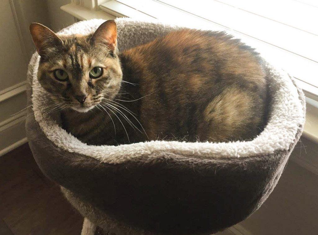 Cat in round cat bed