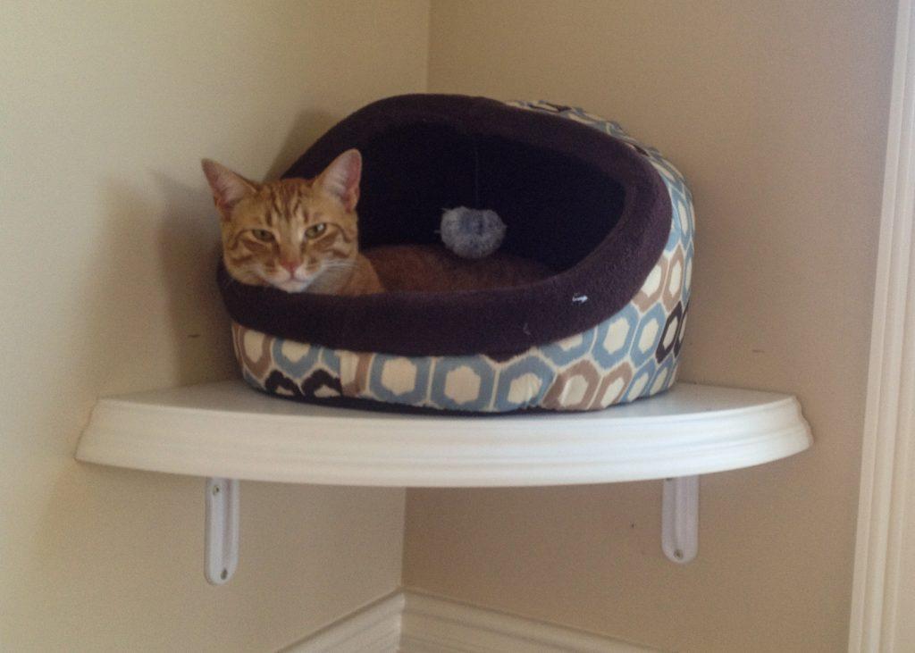 Cat in cat bed on a shelf