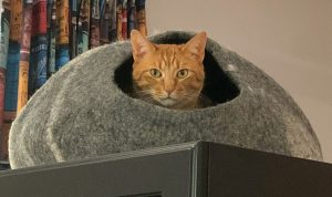 Cat sticking head out of dome cat bed