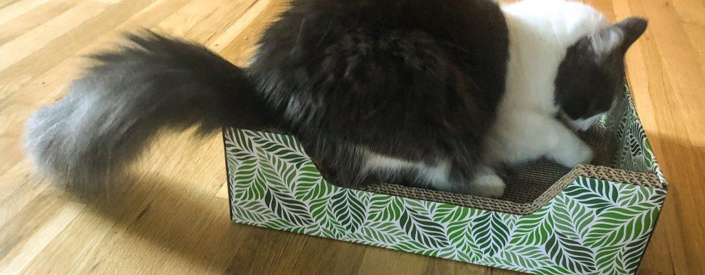 Best Scratching Posts & Other Scratchers