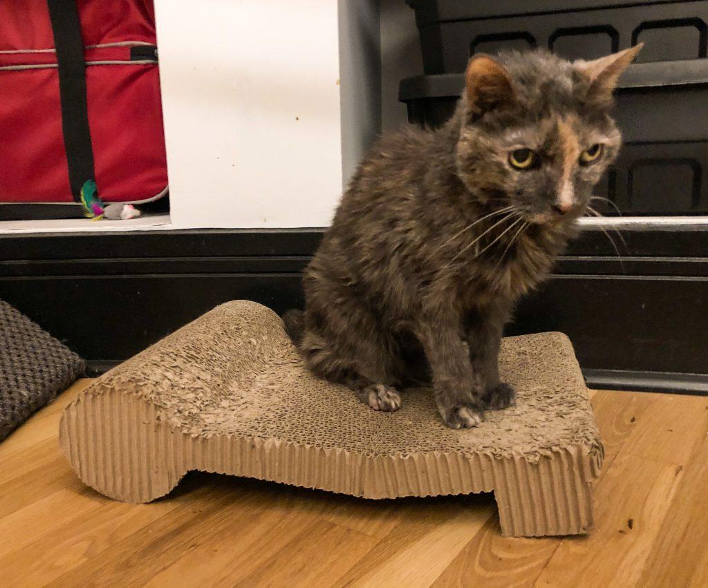 Cat Sitting on flat cat scratcher