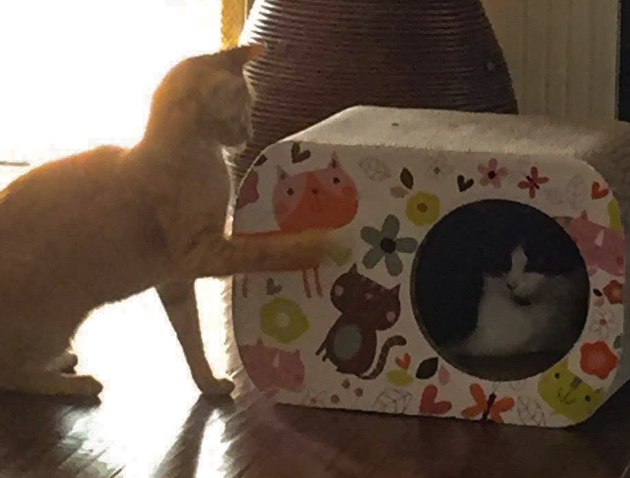 Cat Inside Cat scratcher with hole