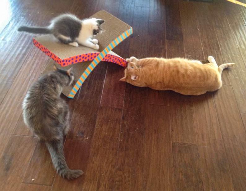 Cats on X Shaped Cat Scratcher
