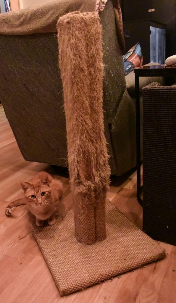 Cat Next to Scratching Post