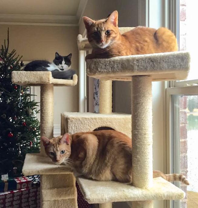 Three Cats on Large Cat Tree
