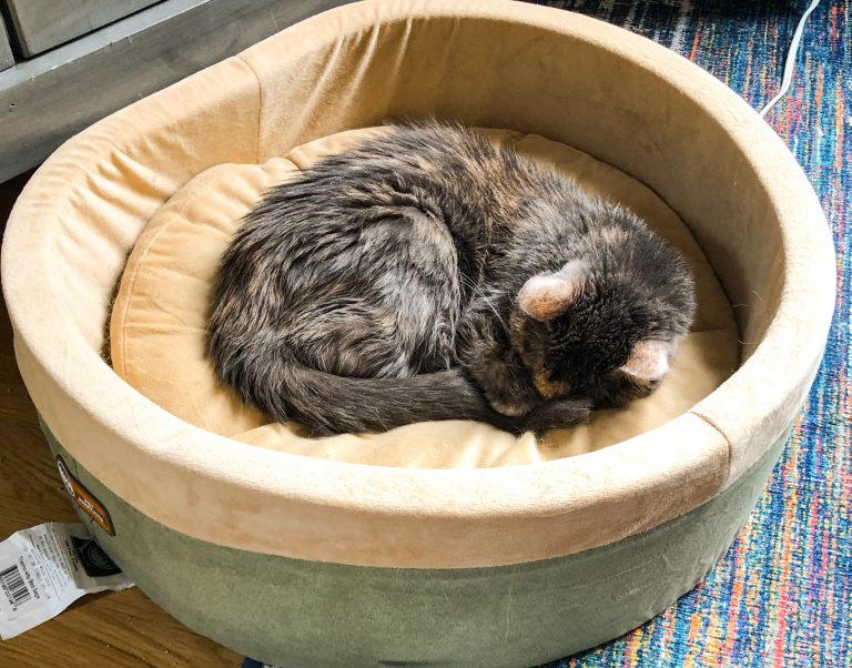Cat in large heated cat bed