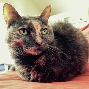 Cat Andi laying like a loaf