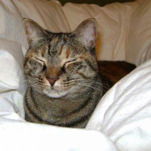 Cat Cassi in White Bedding