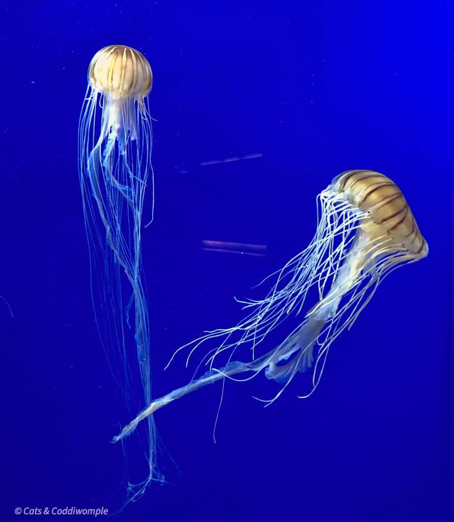 Jellyfish at the Georgia Aquarium