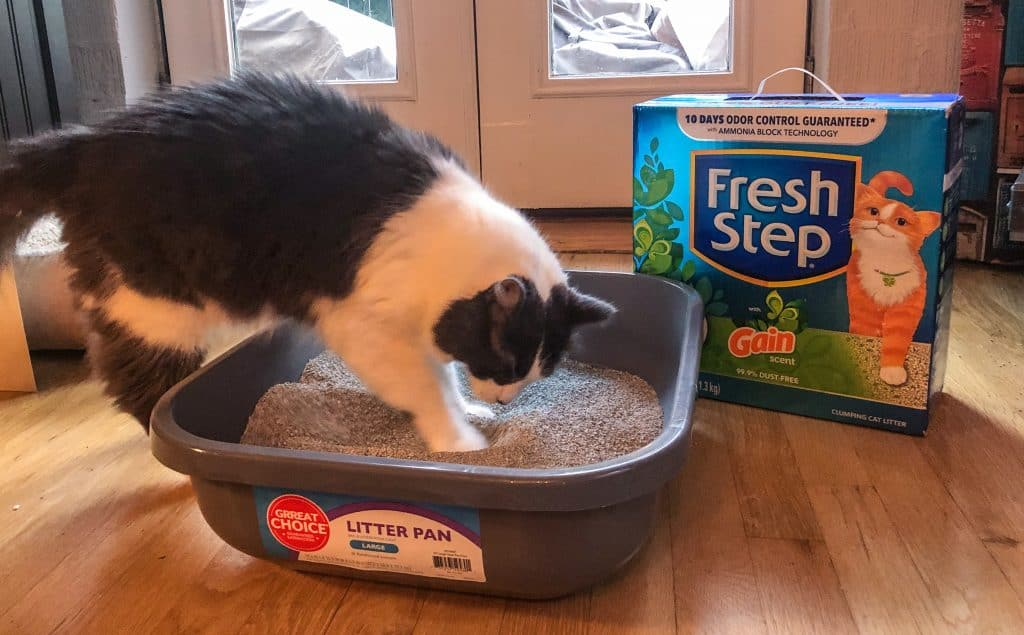 Cat Sniffing Fresh Step with Gain Cat Litter